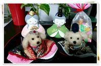 モノトーンインテリア - Toy Poodle ☆Ren&Cocoa
