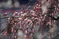 早春の公園散歩 - 季節の風を追いかけて
