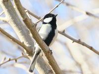 ポタリング2回目 - TACOSの野鳥日記