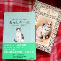 猫の日 - 乙女屋店主の日記