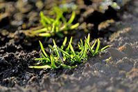 七十二候の第四候 土脉潤起(つちのしょううるおいおこる) - 太田 バンビの SCRAP BOOK
