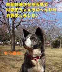 お散歩で発散!! - もももの部屋(家族を待っている保護犬たちと我家の愛犬のブログです)