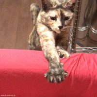 握手かなー - 賃貸ネコ暮らし|賃貸住宅でネコを室内飼いする工夫