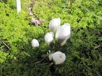 寒くても咲いている - 花の自由旋律