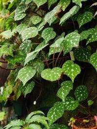 【施設訪問】久しぶりのポンポコ村 - Blog: Living Tropically