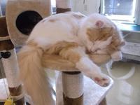 デヴィッド・ボウイとアート - シェークスピアの猫