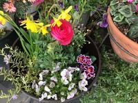 ⭐︎春の花 寄せ植えしました - 街かど 「花」 スポット