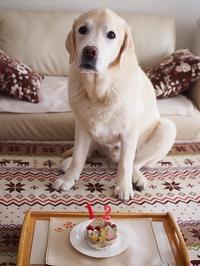 17年2月21日 凛ちゃんおめでとう♪&ひるんぽ♪ - 旅行犬 さくら 桃子 あんず 日記