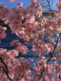 kinuyoga 3月のスケジュール - 自然に身を任せて