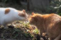今年も猫の日にゃんにゃんにゃん - rambling about...