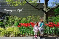 AMNH アメリカ自然史博物館 - Osanpo-Life