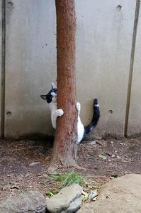 最近の猫事情10 - 鳥会えず猫生活