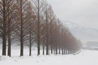 近江は雪国 - 絵本だまり