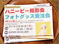 ハニービー 愛犬撮影会のお知らせ - SUPER DOGS blog
