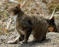 今まで出会った猫たち8 - 自然の写真帖