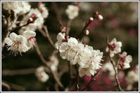 小石川後楽園 -15 - Camellia-shige Gallery 2