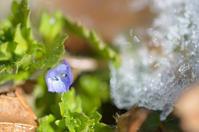 そこら辺の春 +α - Jester's Pictures