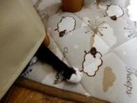 翌日ののらくろさん - 愛犬家の猫日記