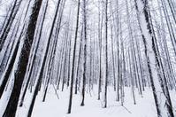 吹雪に耐えて-2 - 自然と仲良くなれたらいいな2
