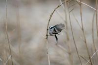 鳥模様・・! - さすらいの写遊人