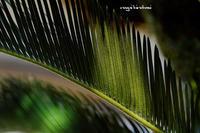 几帳面な美しさ - 長い木の橋