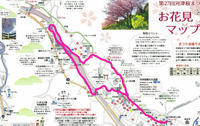 2017年2月12日 河津町 河津桜 - 週末は、愛犬モモと永吉とお出かけ!Kimi's Eye