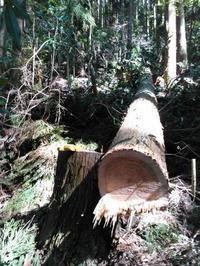久々にお天気な土日でした、一日の作業内容 - 自伐型林業 施業日記