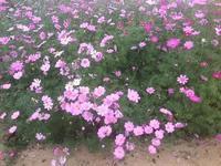 花盛りのお庭へ - Blue Lotus