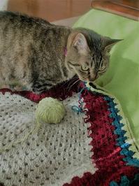 編み物してます - 虹色せんべい