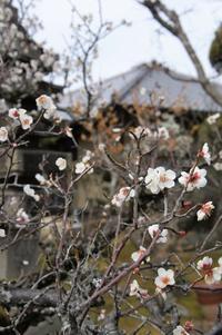 庭が美しい季節になりました、ぜひレッスンにお越しください - Groseille グロゼイユ~四季のお庭とぼちぼちお花活動~