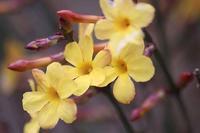 薬用植物園でいろいろな花。散歩道のアトリ - 子猫の迷い道Ⅱ