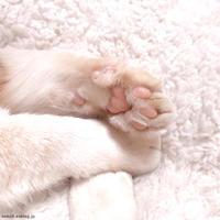 ポンコのにくきゅう - 賃貸ネコ暮らし|賃貸住宅でネコを室内飼いする工夫
