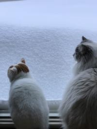猫同士の会話 - 土筆の庭