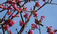 春の遭遇 - 日々 黄昏