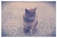 にゃんこの日でしたか。 - Yuruyuru Photograph