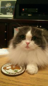 おねこ様の日 - MINKWIN Cattery &Pretty Aki