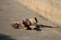 ニャンニャンで猫ダンス - 猪こっと猛進