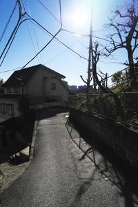 朝の散歩 waku (3cut) -     ~風に乗って~    Present