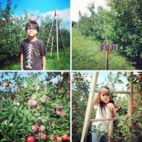 りんご狩り - Osanpo-Life