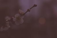 夜の梅 - 「美は観る者の眼の中にある」