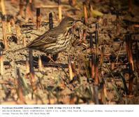 さくら草公園 2017.2.19(2) - 鳥撮り遊び