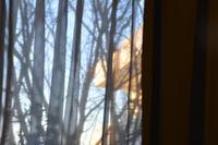 遠くの建物が朝日に燃えていました - 生きる歓び Plaisir de Vivre。人生はつらし、されど愉しく美しく