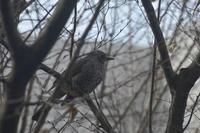 日曜日はぼ〜と借景の鳥と遊んで、、、、 - 生きる歓び Plaisir de Vivre。人生はつらし、されど愉しく美しく