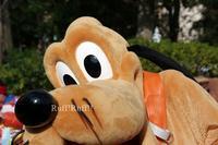 [イン日記]たっくさんのグリーティングでランド満喫! - Ruff!Ruff!! -Pluto☆Love-