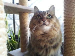 今宵三省堂でトークイベント - ご機嫌元氣猫の森公式ブログ