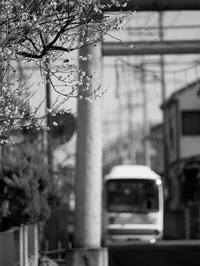 梅が咲く頃 - 節操のない写真館