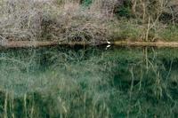 白鷺 - lo scatto