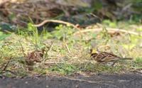 そろそろ春だねえ。 - poiyoの野鳥を探しに