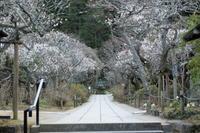 梅香る東慶寺へ〜北鎌倉 - ヴェネツィア ときどき イタリア・2