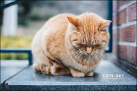 222は猫の日 - すずちゃんのカメラ!かめら!camera!